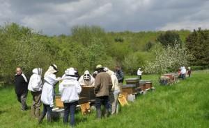 Activités au rucher école