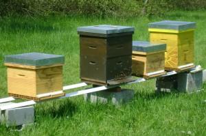Les ruches décorées et habitées