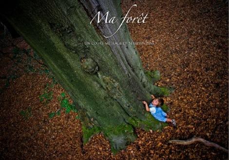 Ma forêt 760-532