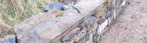 le mur en pierres sèches: 20m de long sur 50cm de haut